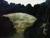 Nimphis loci alle ninfe del luogo, Montalcino, una radura, 2009, olio su cartone, cm 36x50,5